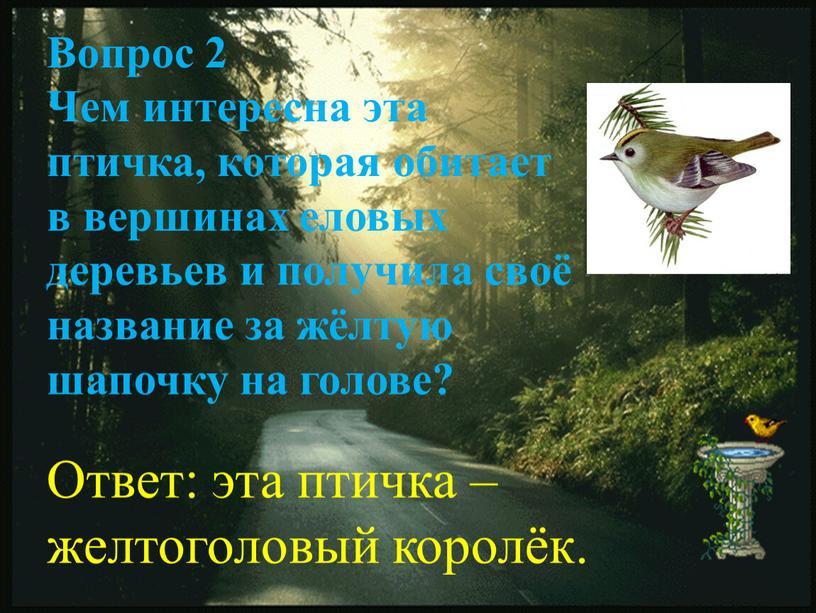 Вопрос 2 Чем интересна эта птичка, которая обитает в вершинах еловых деревьев и получила своё название за жёлтую шапочку на голове?
