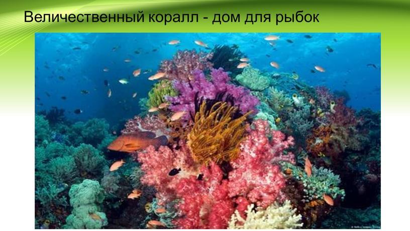 Величественный коралл - дом для рыбок