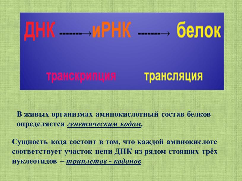 Сущность кода состоит в том, что каждой аминокислоте соответствует участок цепи
