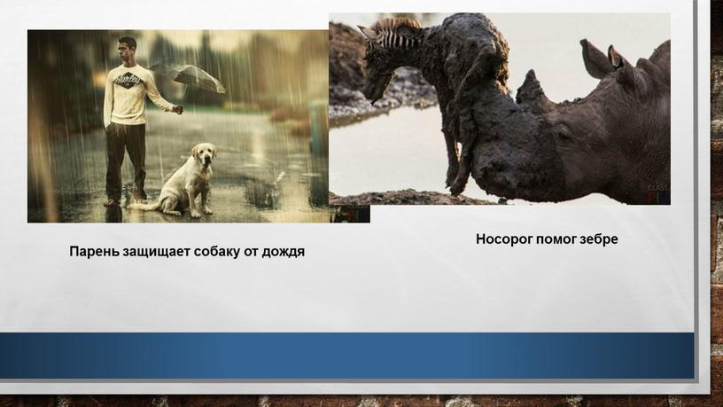 Носорог помог зебре Парень защищает собаку от дождя