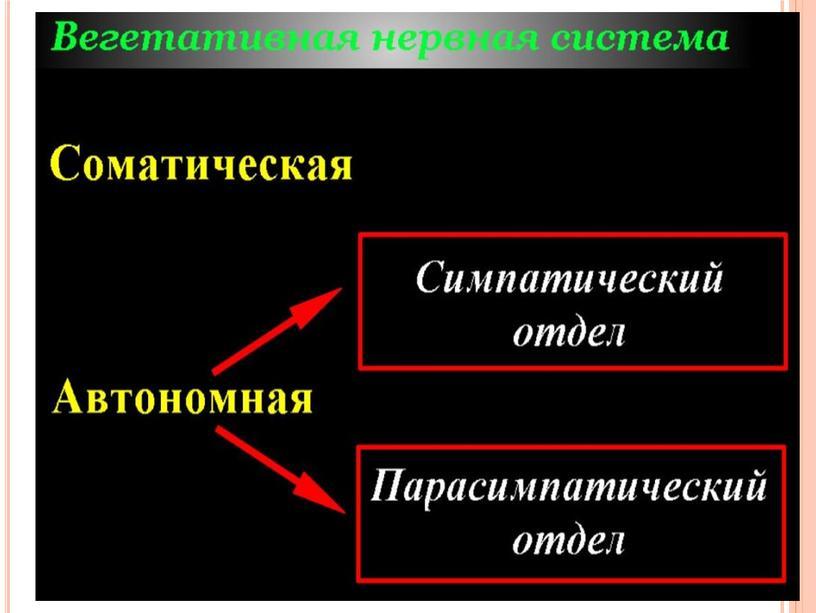"""Презентация к уроку """"Нервная система"""""""