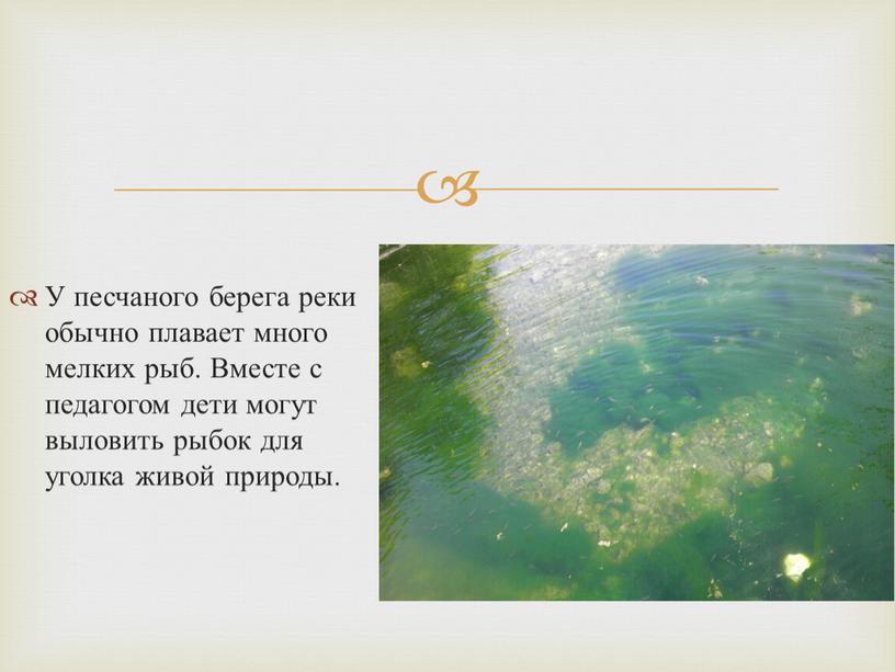 У песчаного берега реки обычно плавает много мелких рыб