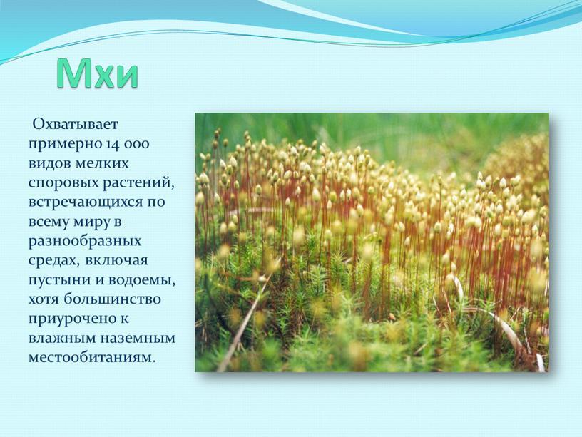 Мхи Охватывает примерно 14 000 видов мелких споровых растений, встречающихся по всему миру в разнообразных средах, включая пустыни и водоемы, хотя большинство приурочено к влажным…