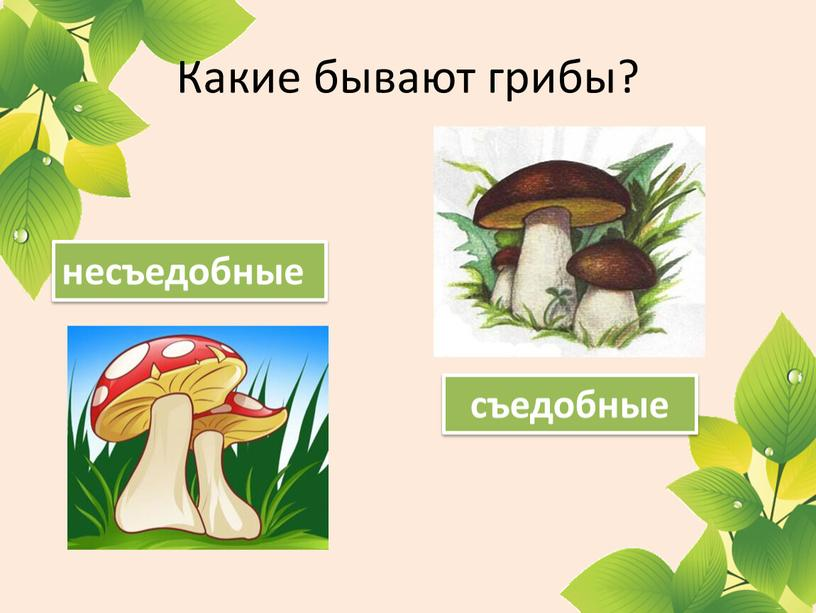 Какие бывают грибы? съедобные несъедобные