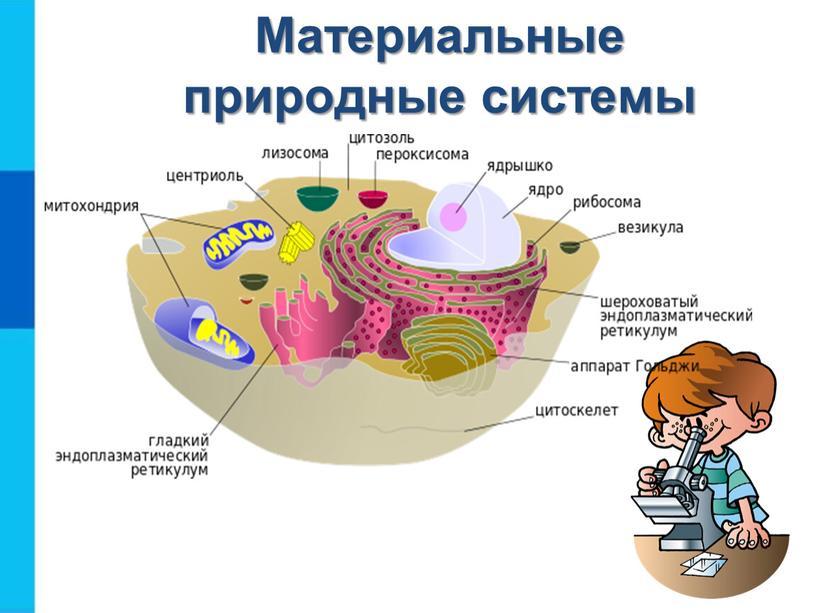 Материальные природные системы