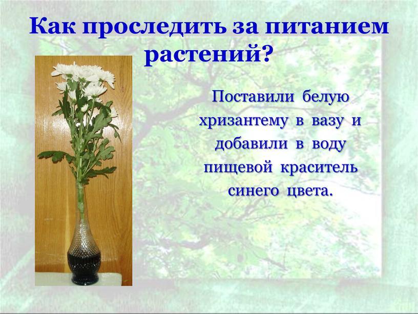 Как проследить за питанием растений?