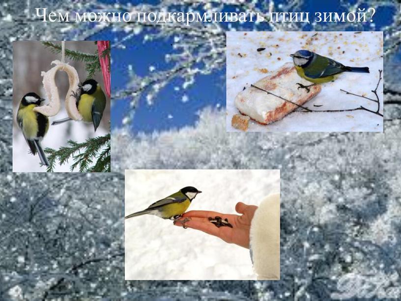 Чем можно подкармливать птиц зимой?