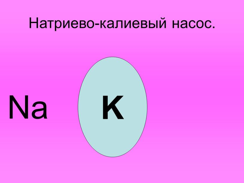 Натриево-калиевый насос. K Na