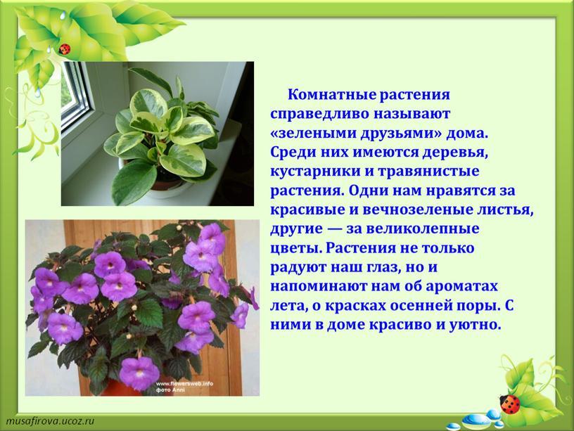 Комнатные растения справедливо называют «зелеными друзьями» дома