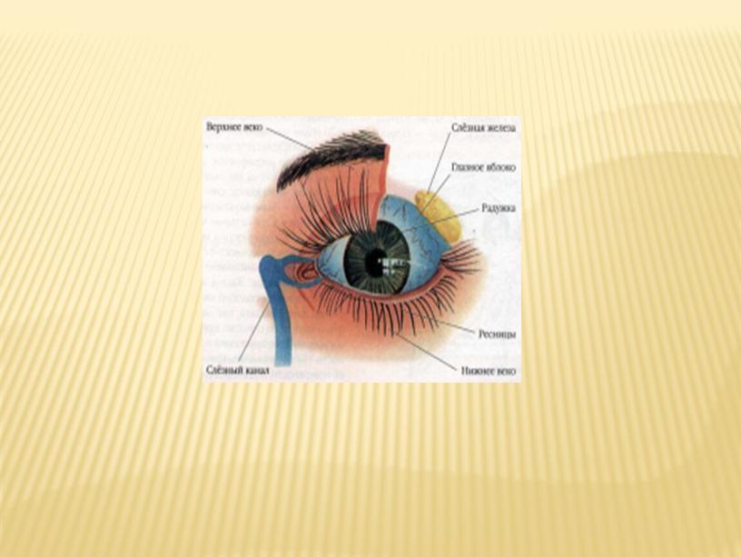 """Классный час """"Глаза - главные помощники человека. Гигиена зрения. Забота о глазах"""""""