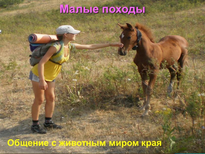 Малые походы Общение с животным миром края