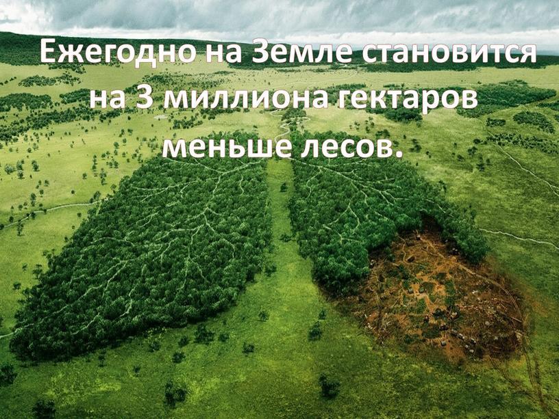Ежегодно на Земле становится на 3 миллиона гектаров меньше лесов