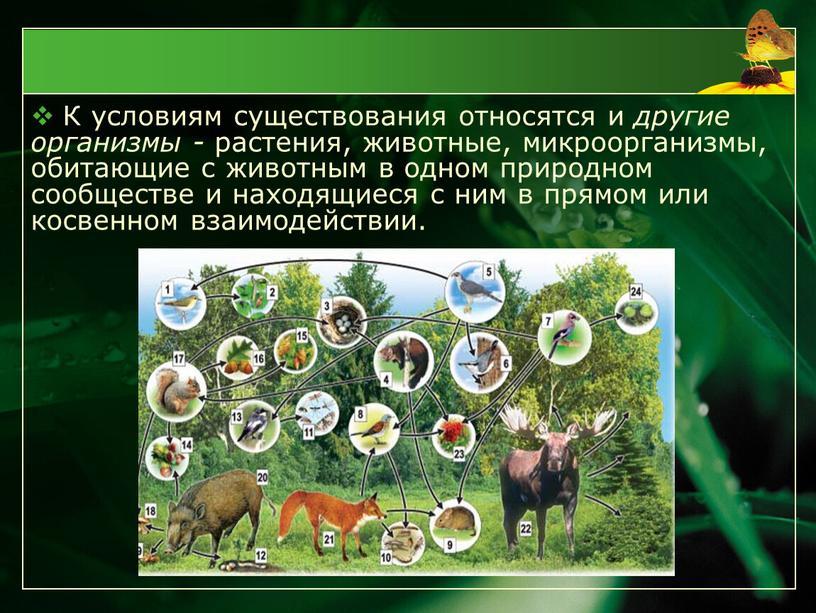 К условиям существования относятся и другие организмы - растения, животные, микроорганизмы, обитающие с животным в одном природном сообществе и находящиеся с ним в прямом или…