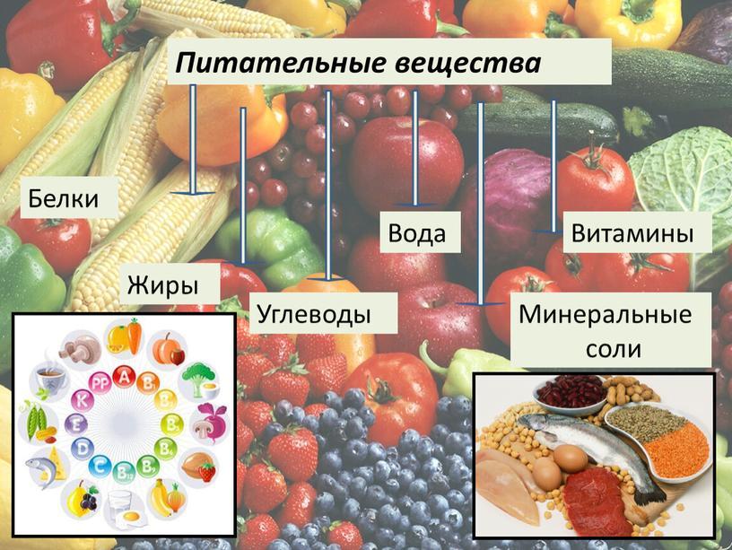 Питательные вещества Белки Жиры