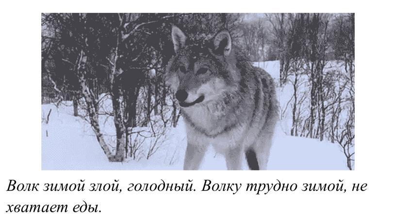 Волк зимой злой, голодный. Волку трудно зимой, не хватает еды