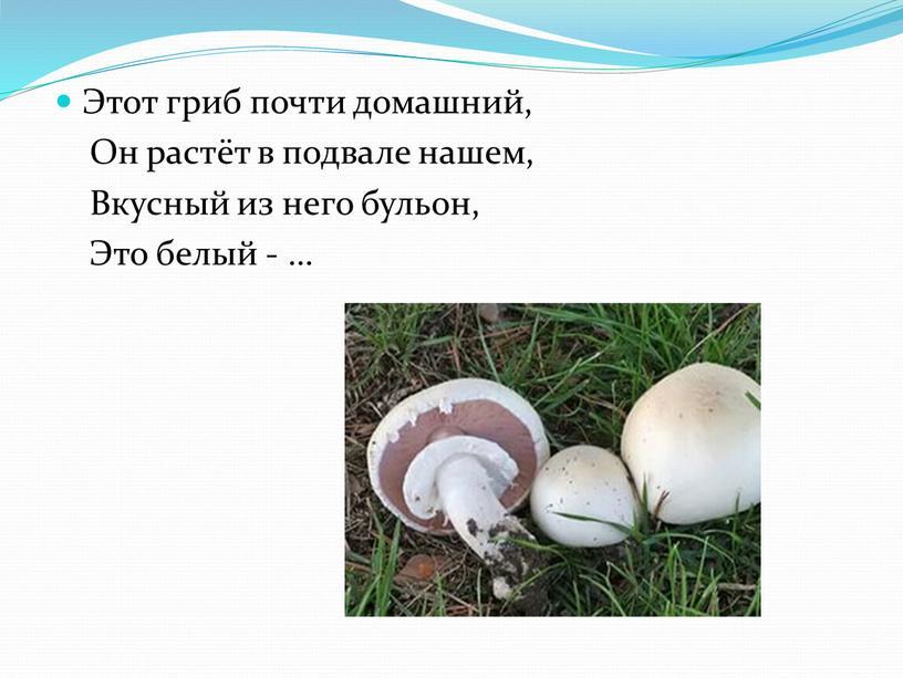 Этот гриб почти домашний, Он растёт в подвале нашем,