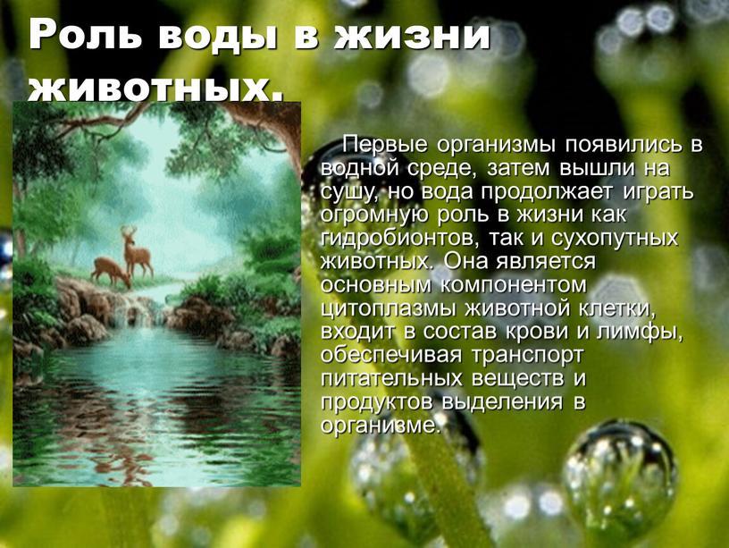 Роль воды в жизни животных. Первые организмы появились в водной среде, затем вышли на сушу, но вода продолжает играть огромную роль в жизни как гидробионтов,…