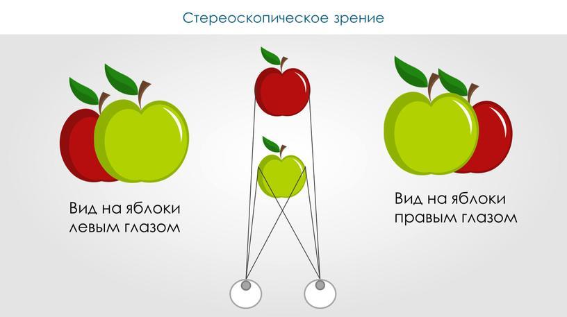 Вид на яблоки левым глазом Вид на яблоки правым глазом