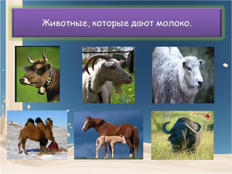 Животные, которые дают молоко.