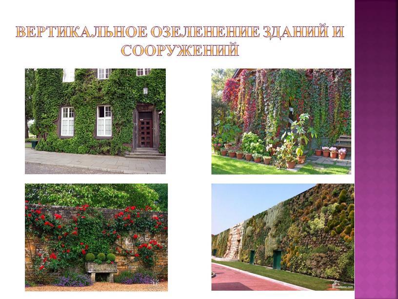 Вертикальное озеленение зданий и сооружений
