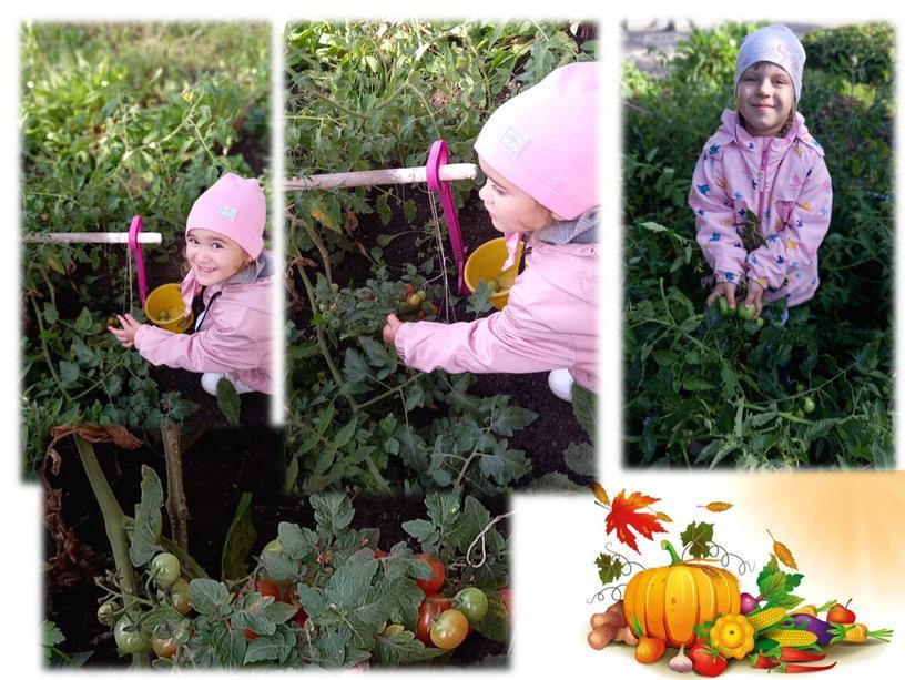 Осень урожайная