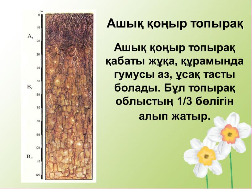Ашық қоңыр топырақ қабаты жұқа, құрамында гумусы аз, ұсақ тасты болады