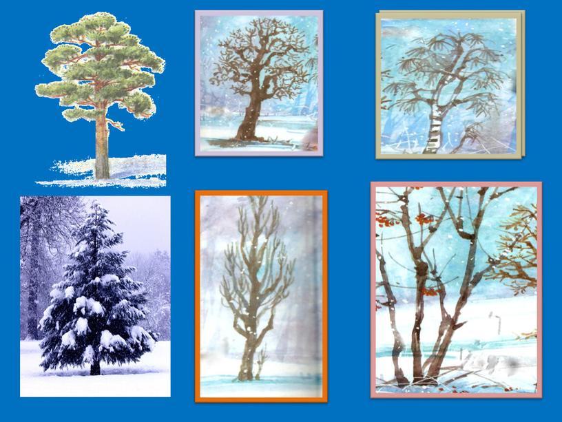 Урок окружающего мира 1 класс Тема : Учимся различать деревья и кустарники зимой