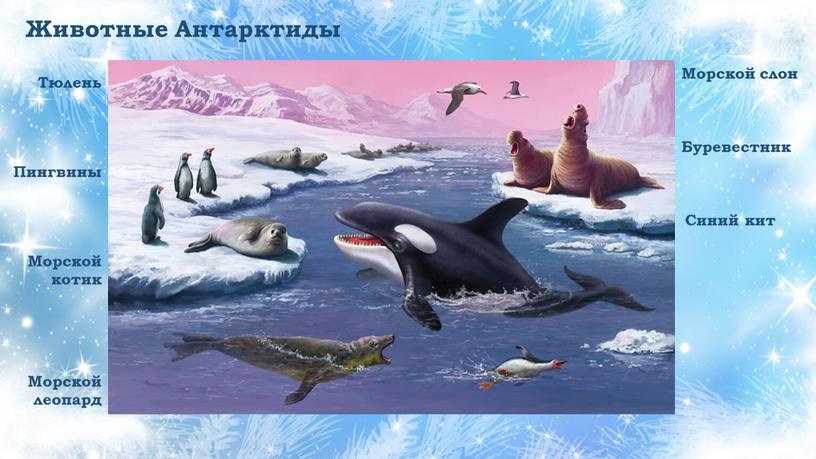 Животные Антарктиды Пингвины Морской котик