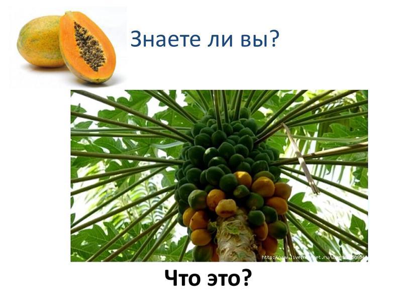 Знаете ли вы? Что это?