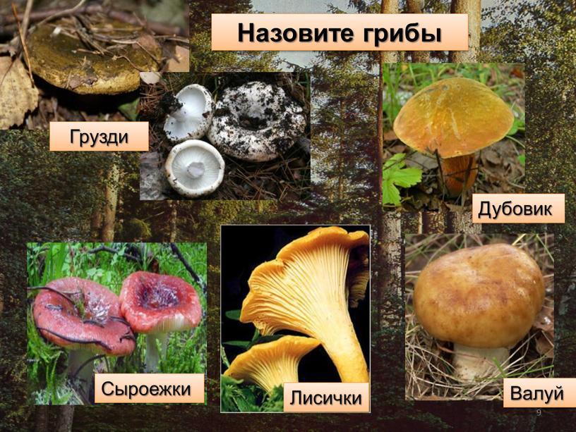 Назовите грибы Сыроежки Грузди