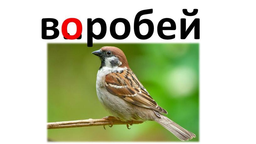 в..робей о