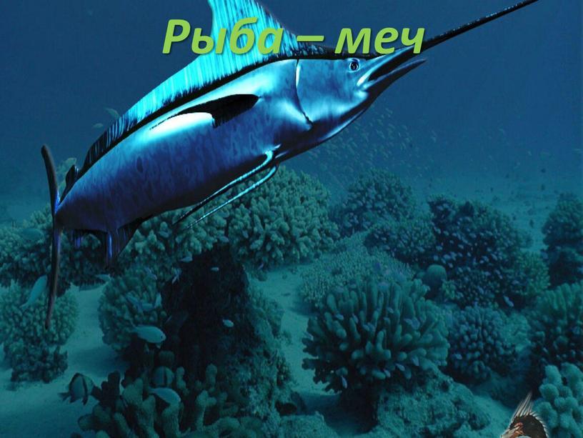 Рыба – меч