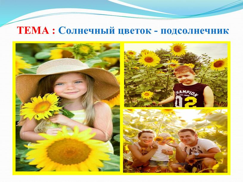 ТЕМА : Солнечный цветок - подсолнечник