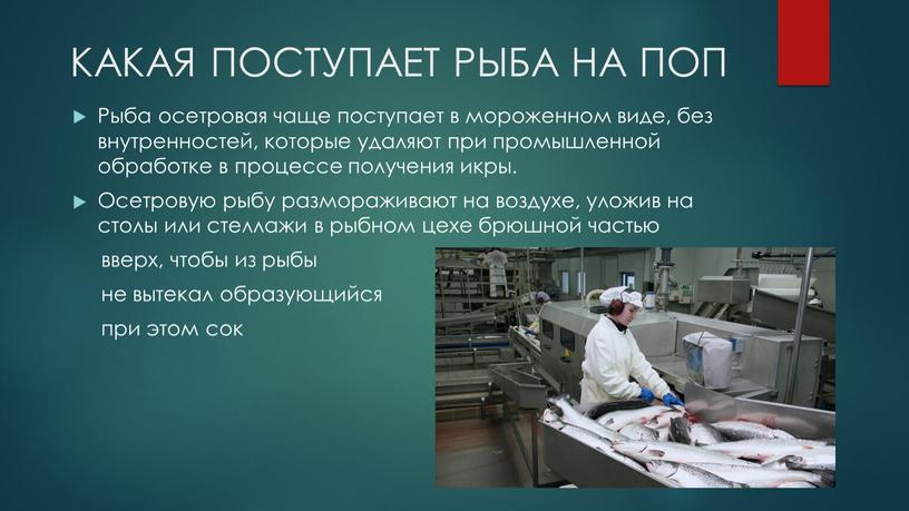 КАКАЯ ПОСТУПАЕТ РЫБА НА ПОП Рыба осетровая чаще поступает в мороженном виде, без внутренностей, которые удаляют при промышленной обработке в процессе получения икры