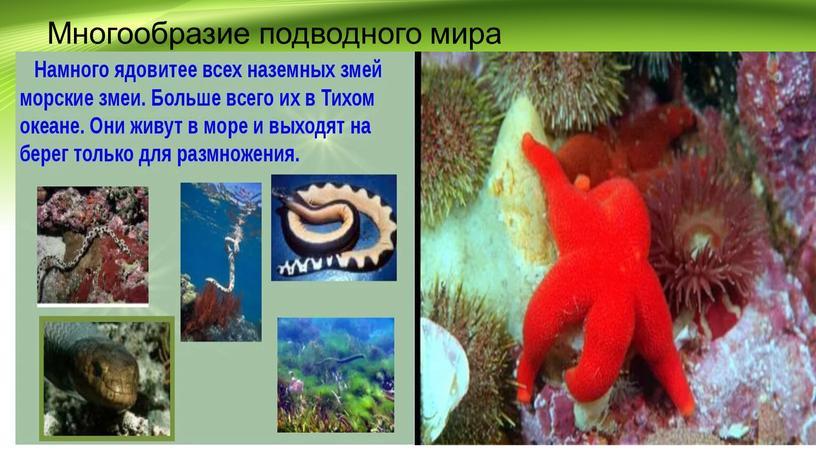 Многообразие подводного мира