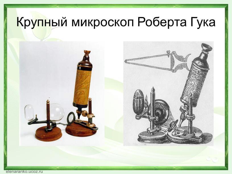 Крупный микроскоп Роберта Гука