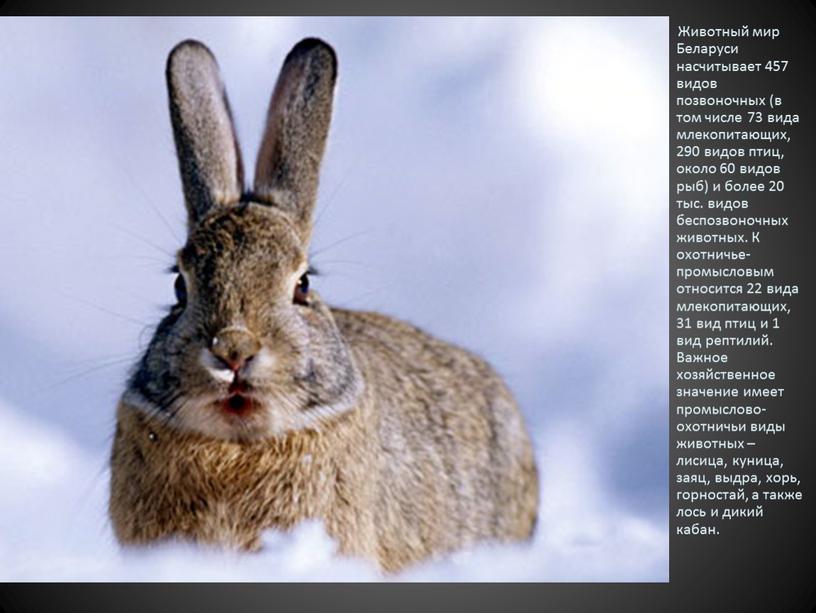 Животный мир Беларуси насчитывает 457 видов позвоночных (в том числе 73 вида млекопитающих, 290 видов птиц, около 60 видов рыб) и более 20 тыс
