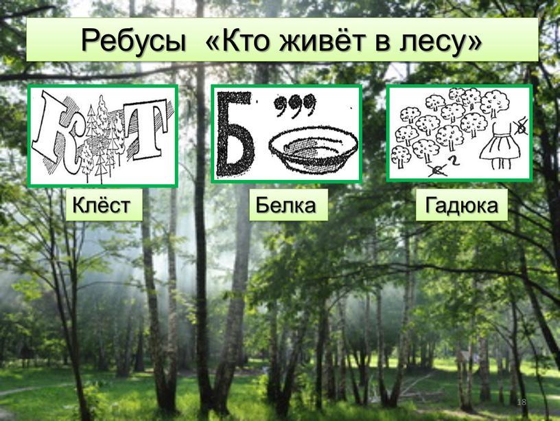 Ребусы «Кто живёт в лесу» Клёст