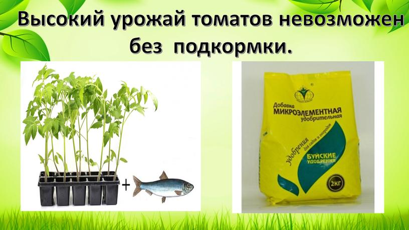 Высокий урожай томатов невозможен без подкормки