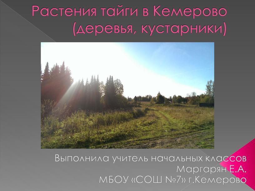 Растения тайги в Кемерово (деревья, кустарники)