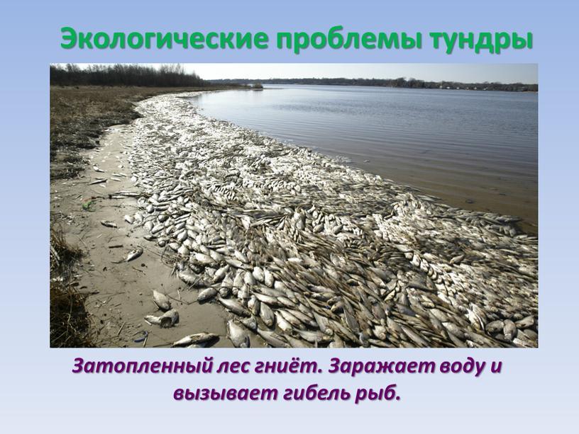 Затопленный лес гниёт. Заражает воду и вызывает гибель рыб