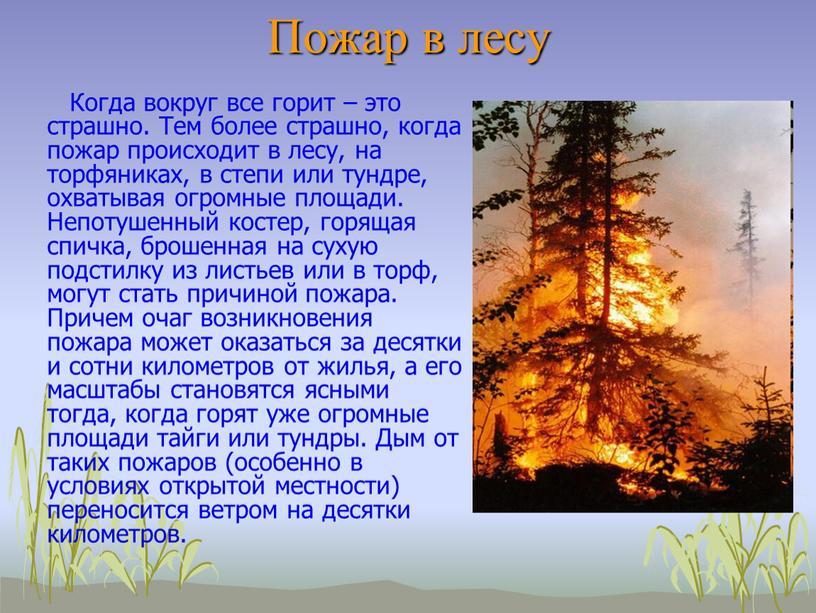 Пожар в лесу Когда вокруг все горит – это страшно