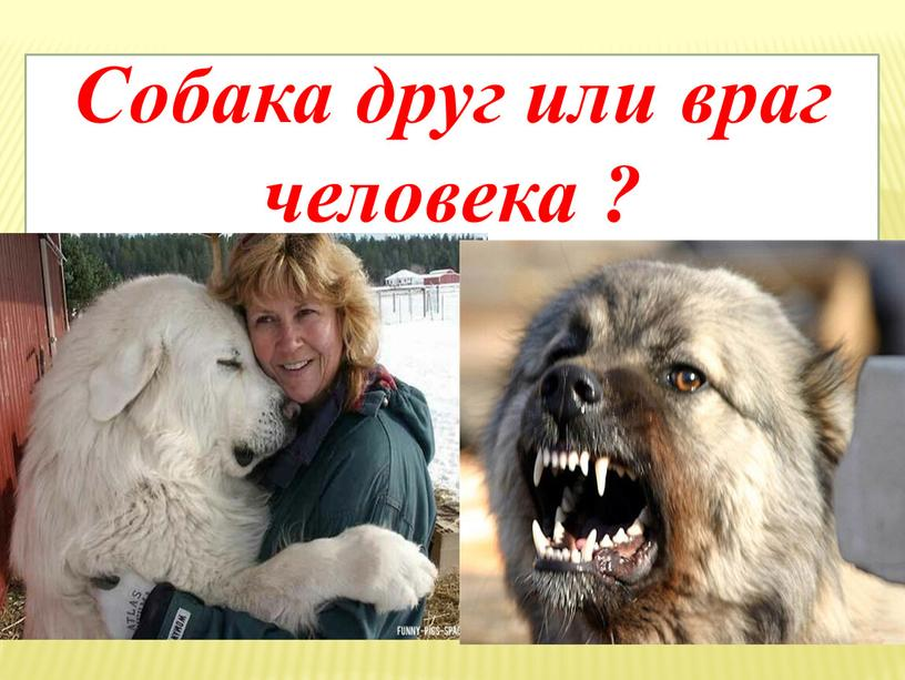 Собака друг или враг человека ?
