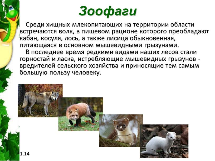 Зоофаги Среди хищных млекопитающих на территории области встречаются волк, в пищевом рационе которого преобладают кабан, косуля, лось, а также лисица обыкновенная, питающаяся в основном мышевидными…