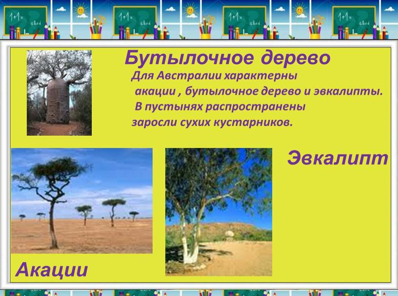 Бутылочное дерево Акации Эвкалипт