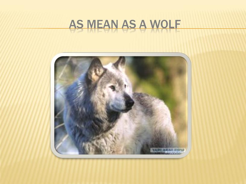 As mean as a wolf
