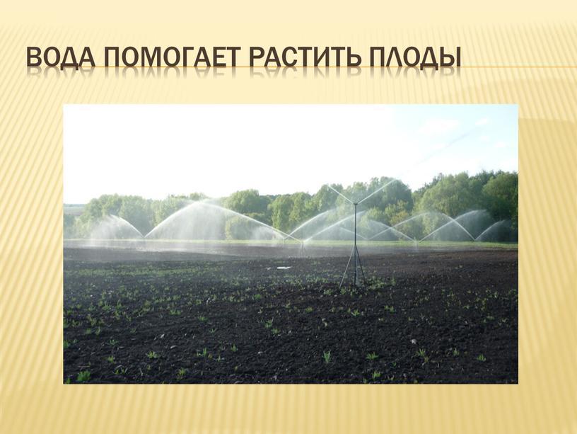 Вода помогает растить плоды
