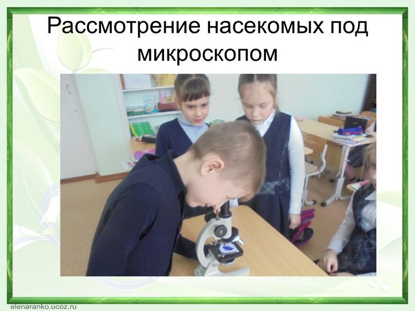 Рассмотрение насекомых под микроскопом