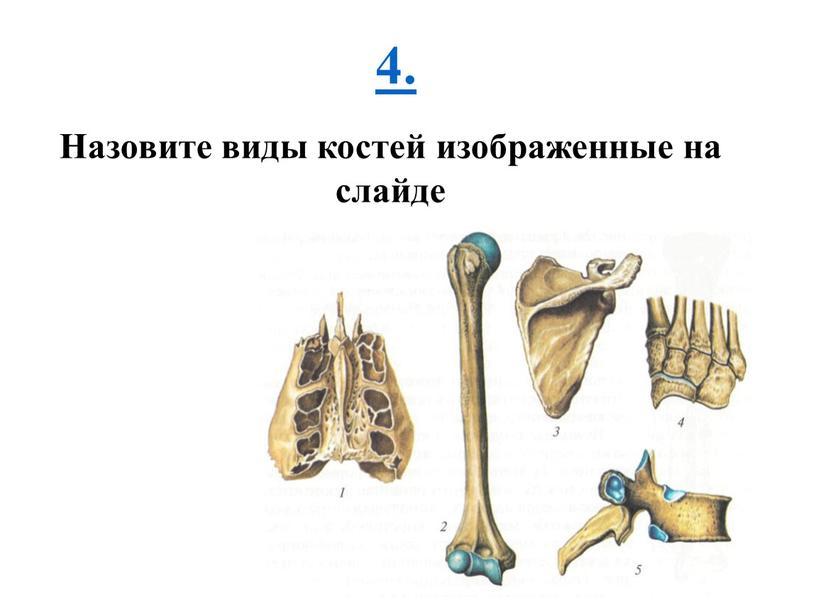 Назовите виды костей изображенные на слайде