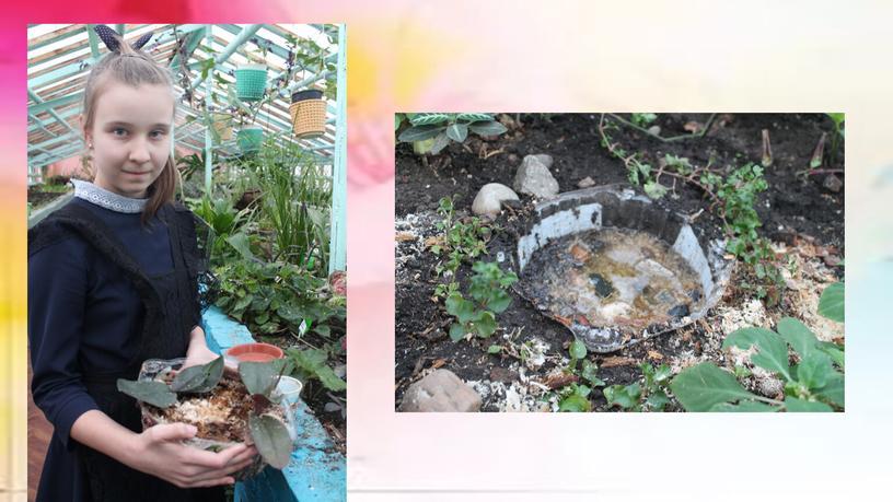 """Практическая работа """"Лечение орхидеи Фаленопсис разными способами"""""""
